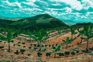 Agroforestry in Brazil