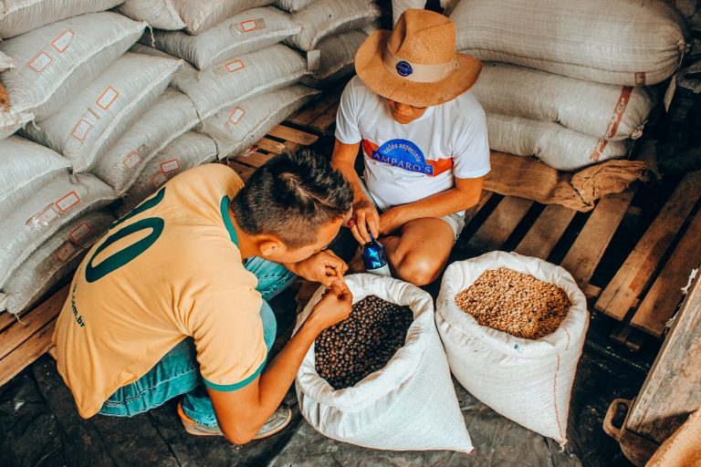 Checking quality of beans in Brazil