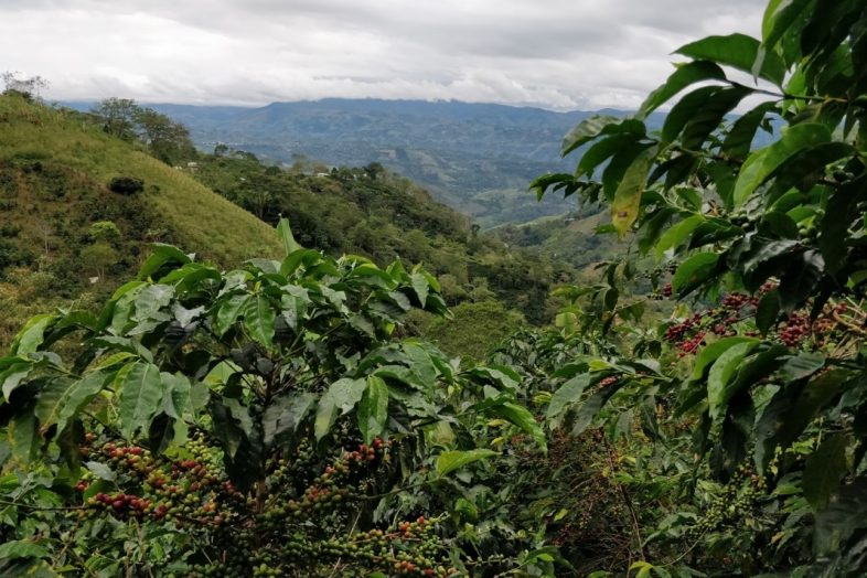 Coffee Origen - Farm 3